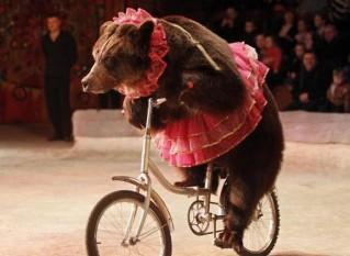 bear tutu bike
