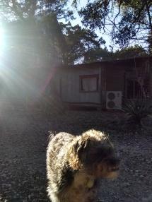 Buddy, cabin, sun 2