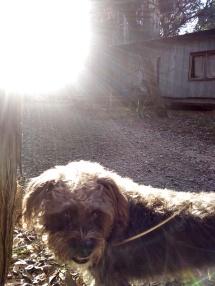 Buddy, cabin, sun 1