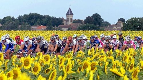 sunflowers and TDF cyclists