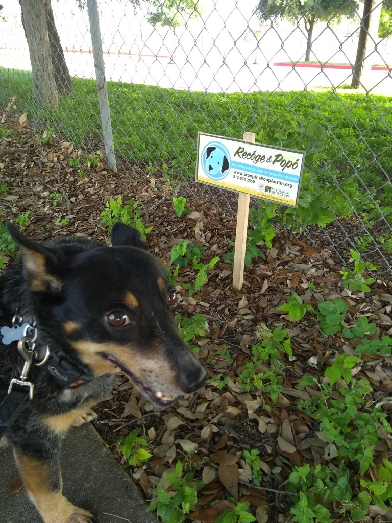 10 Days of Walking and Hanging with Missy, the Cattle Dog